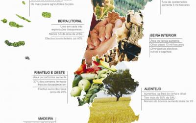 recenseamento agrícola